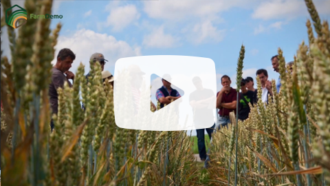 FARMDEMO Youtube How to increase interaction during on-farm demonstration events